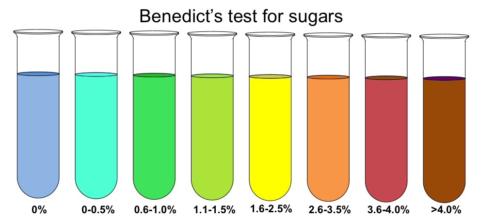 benedict s test for reducing sugars What was the positive reaction to reducing sugars in the benedict's test definition orange(very positive) term what was the negative reaction for reducing sugars in the benedict's test definition blue and green for very little amount of reducing sugars.