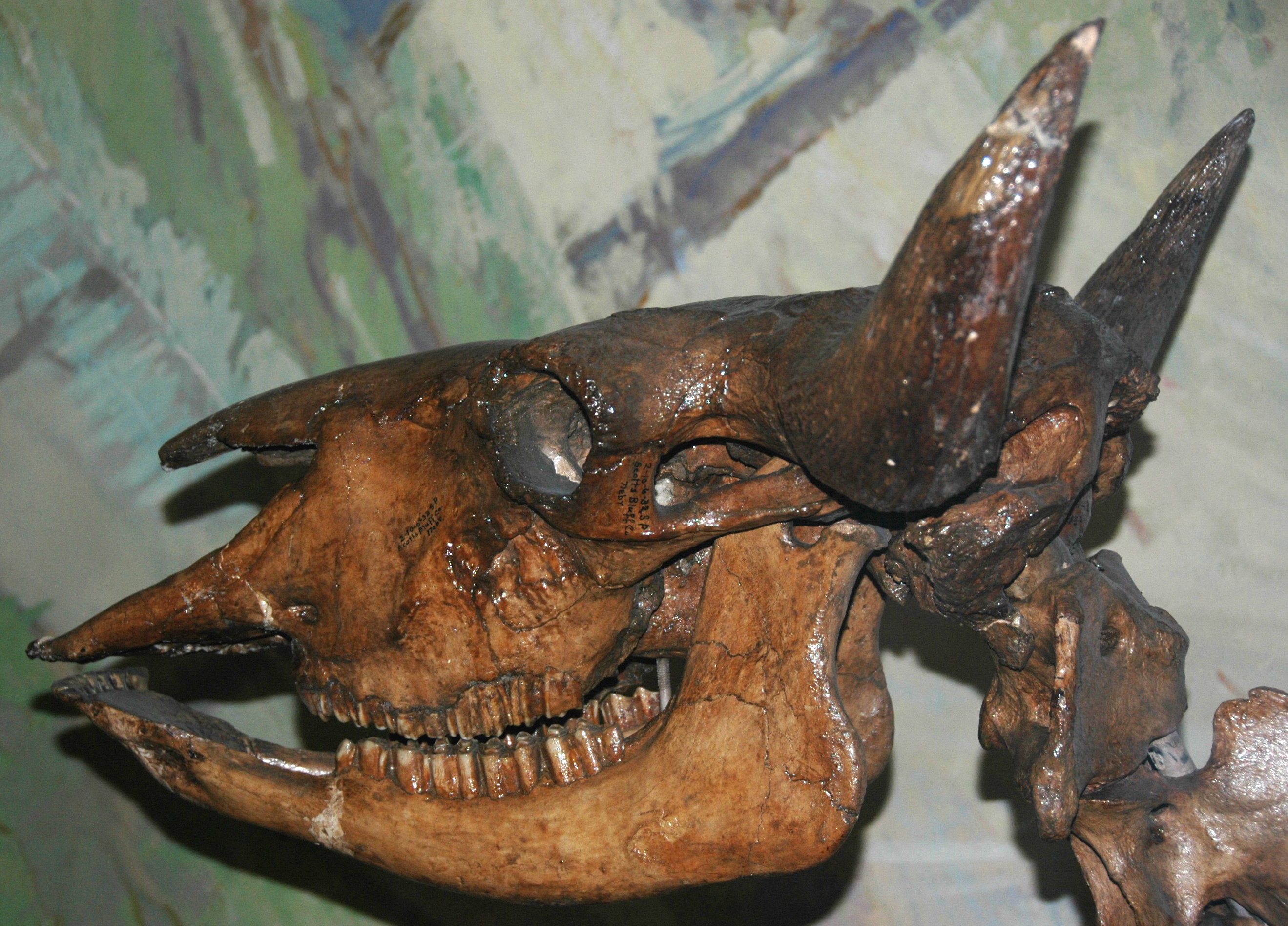 Bison antiquus wiki - photo#24