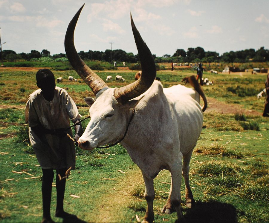 essay d sudan It shares a common border with the following countries: angola, burundi, central african republic, republic of the congo, rwanda, south sudan, tanzania, uganda, and zambia democratic republic of congo was established as a belgian colony in 1908 during the scramble for africa by the european powers.