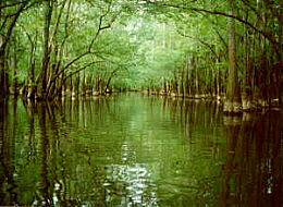 Congaree National Park, Hopkins Congaree swamp.jpg