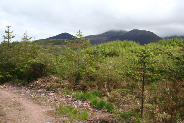 File:Conifer plantation with MacGillycuddy's Reeks behind - geograph.org.uk - 456645.jpg