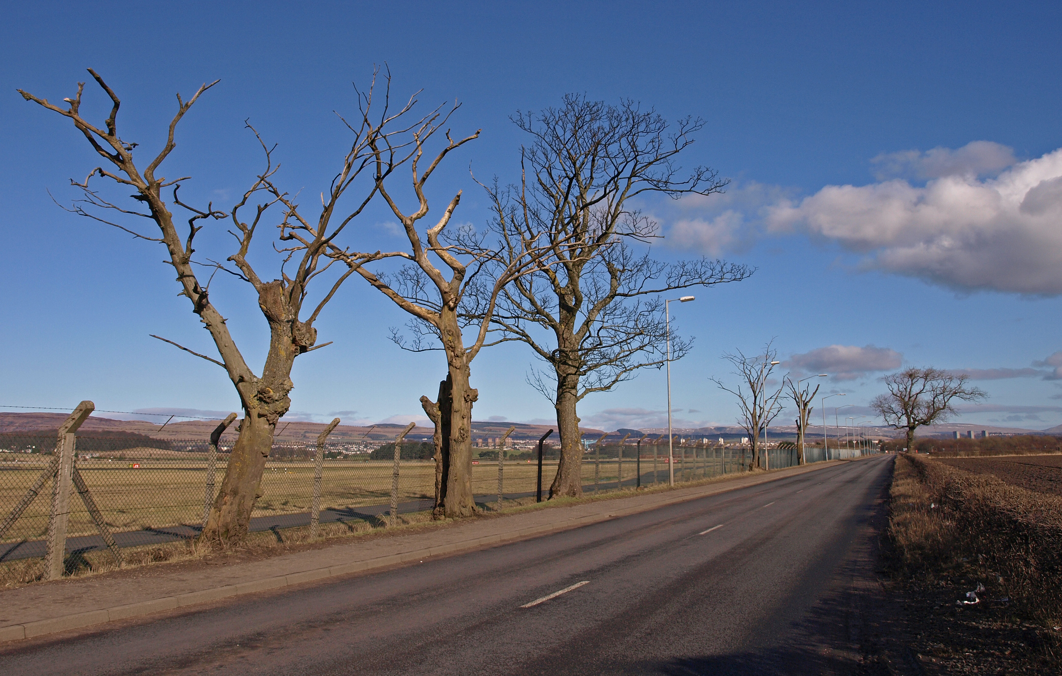 File Dead Trees Glasgow Airport Geograph Org Uk