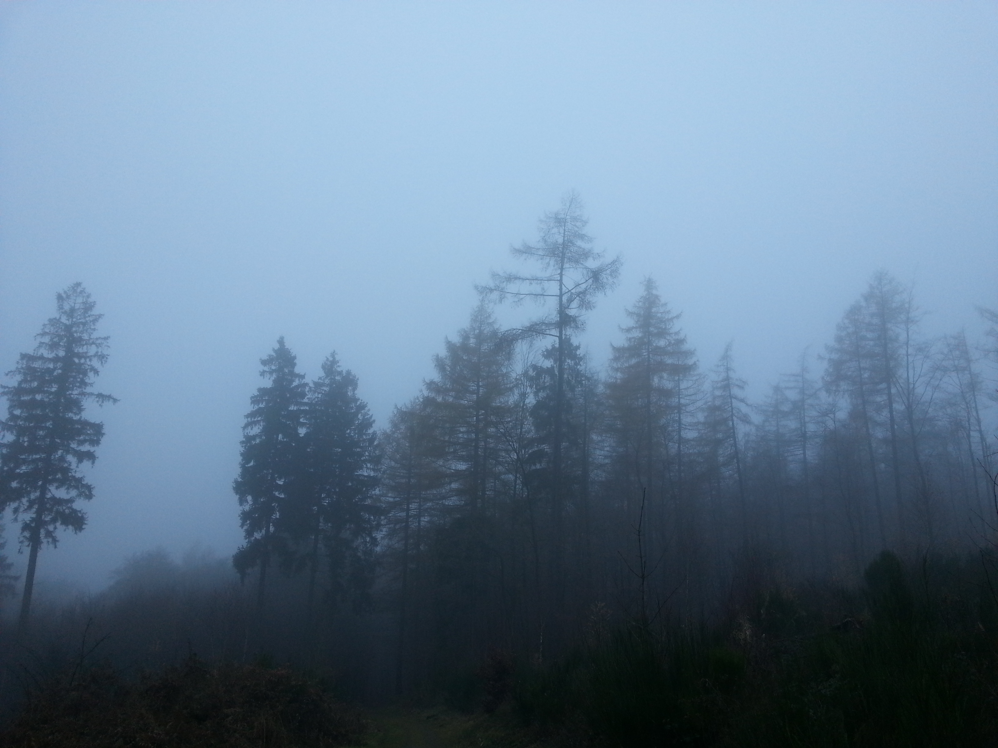 https://upload.wikimedia.org/wikipedia/commons/8/81/Depressing_path_in_the_twilight.jpg