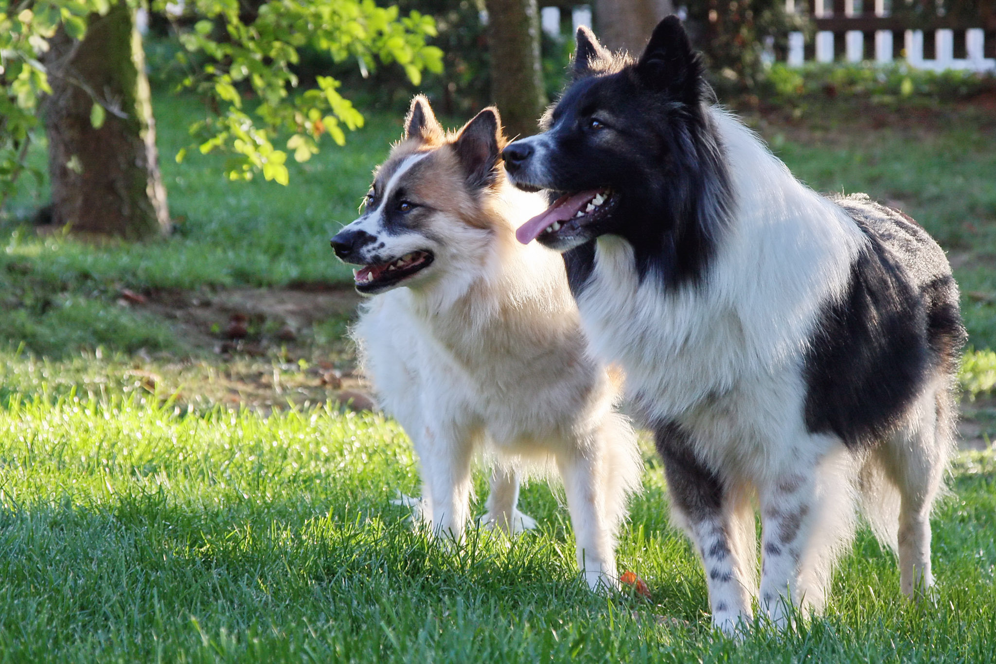 Are Collie Dogs Good With Kids