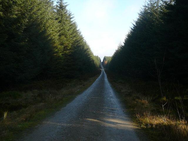 Forest drive, Llandegla Forest - geograph.org.uk - 1149838