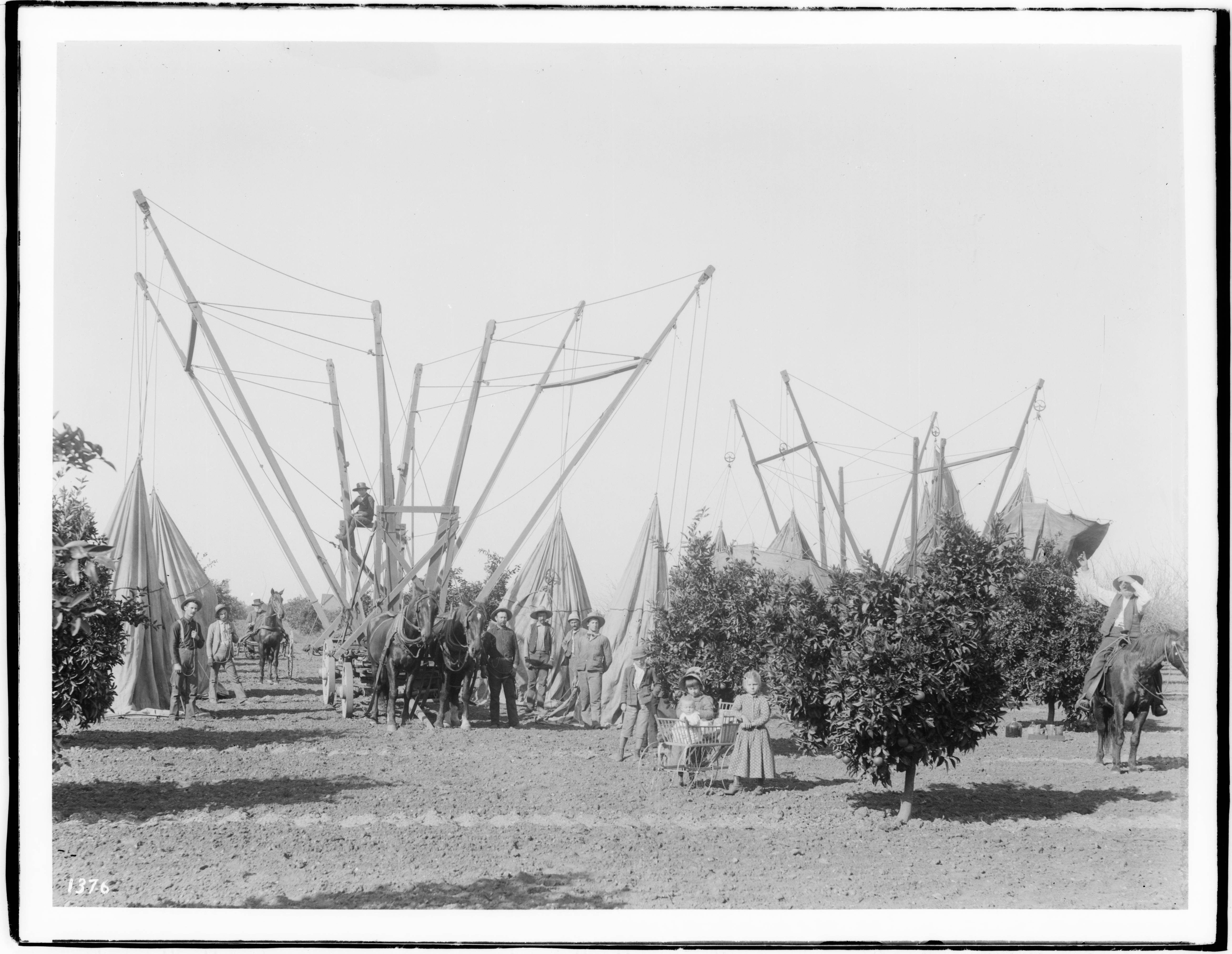 File:Fumigating equipment, workers and children in a citrus orchard, ca.1892