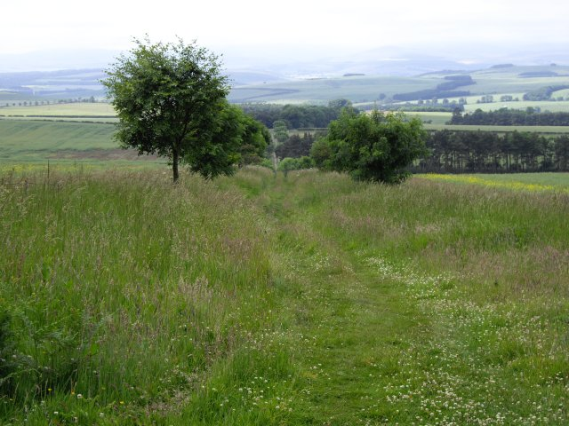 Grassy lane - geograph.org.uk - 1454519