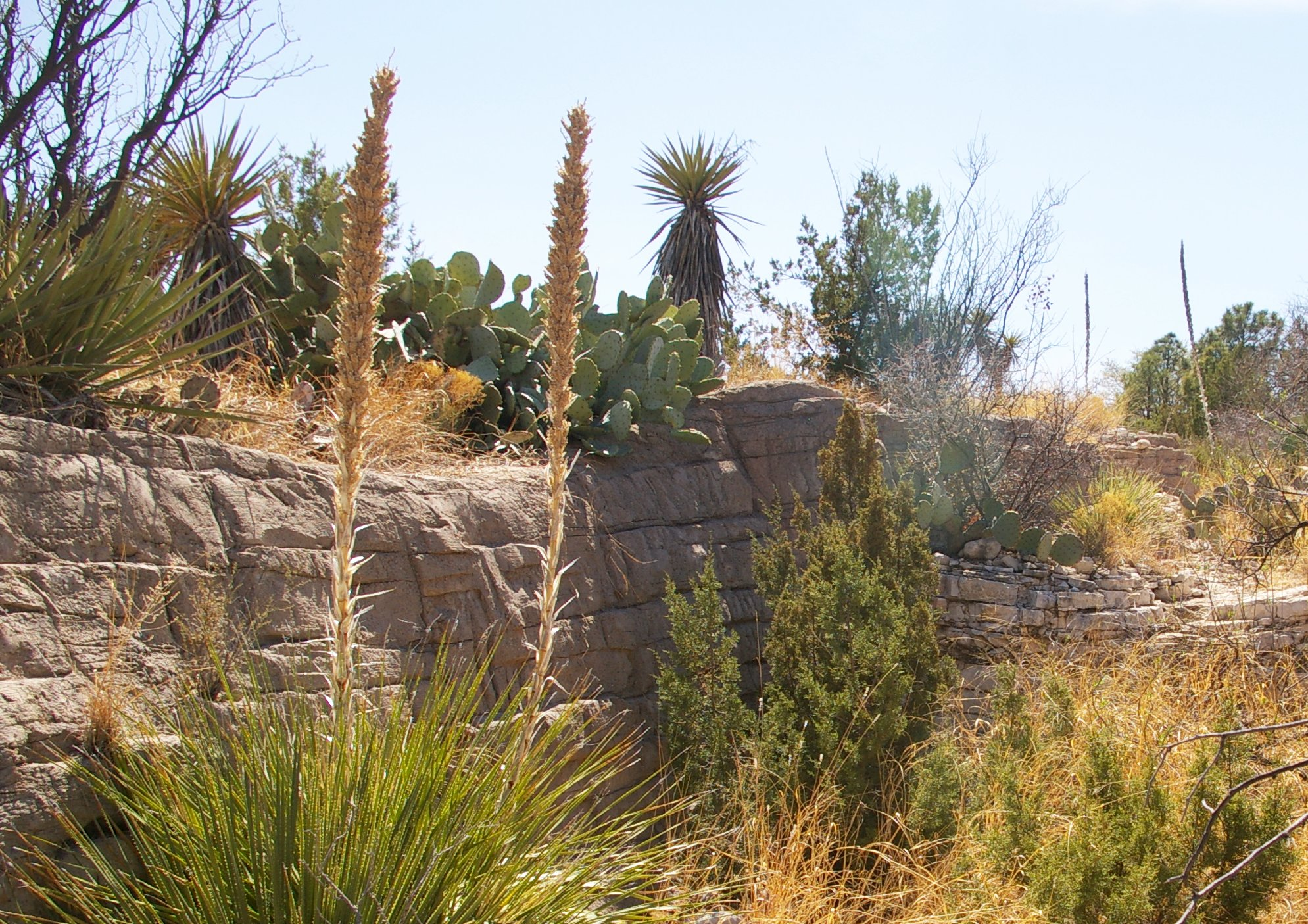 Living Desert Zoo and Gardens State Park, Carlsbad | Roadtrippers