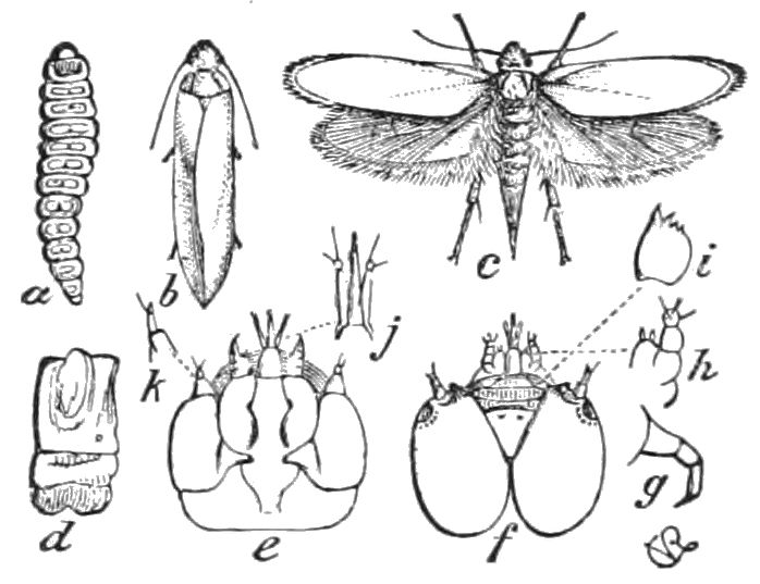 Popular Science Monthlyvolume 41june 1892the Yucca Moth And Yucca