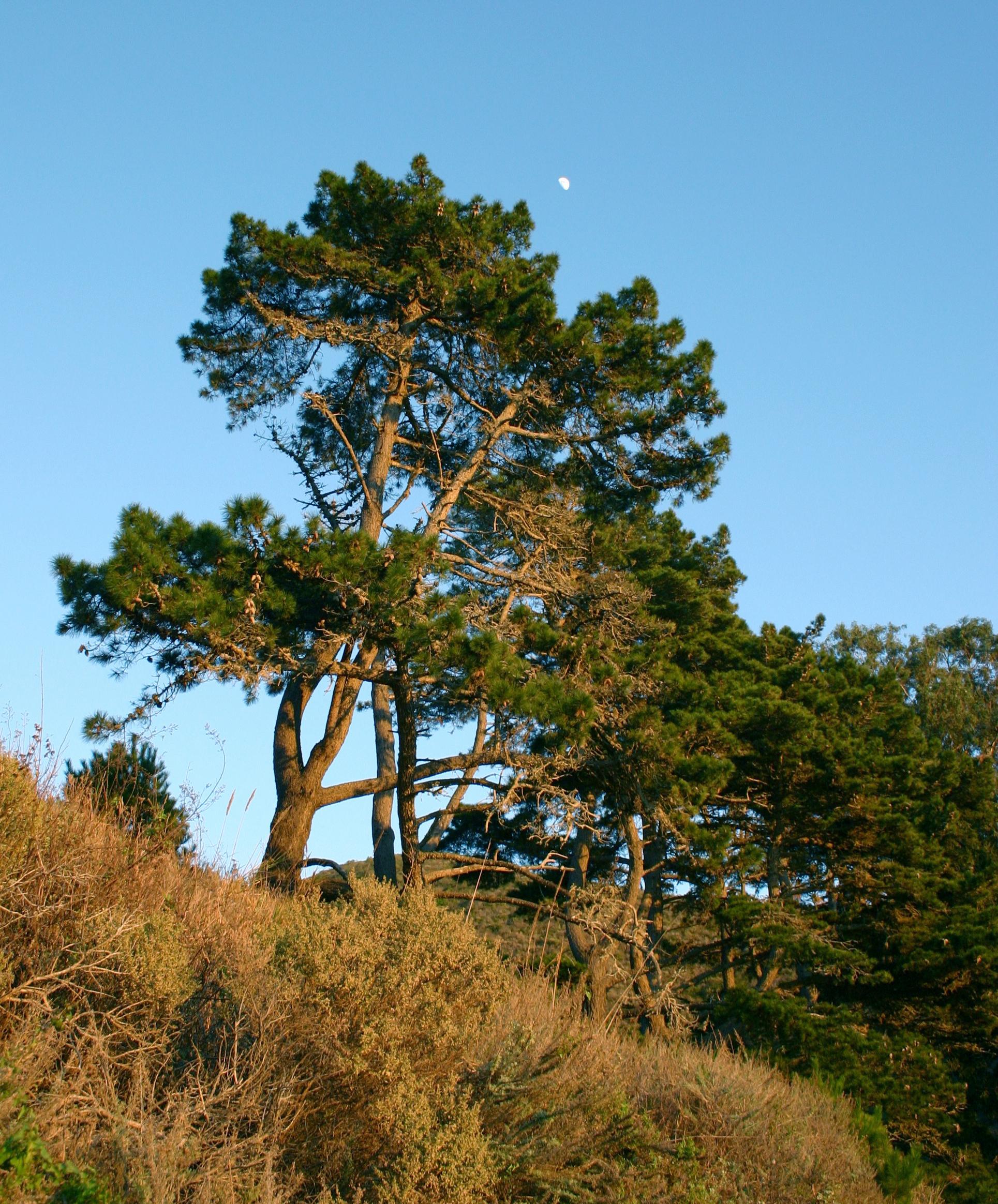 Деревьяобрубки из российских городов 15 фото  Триникси