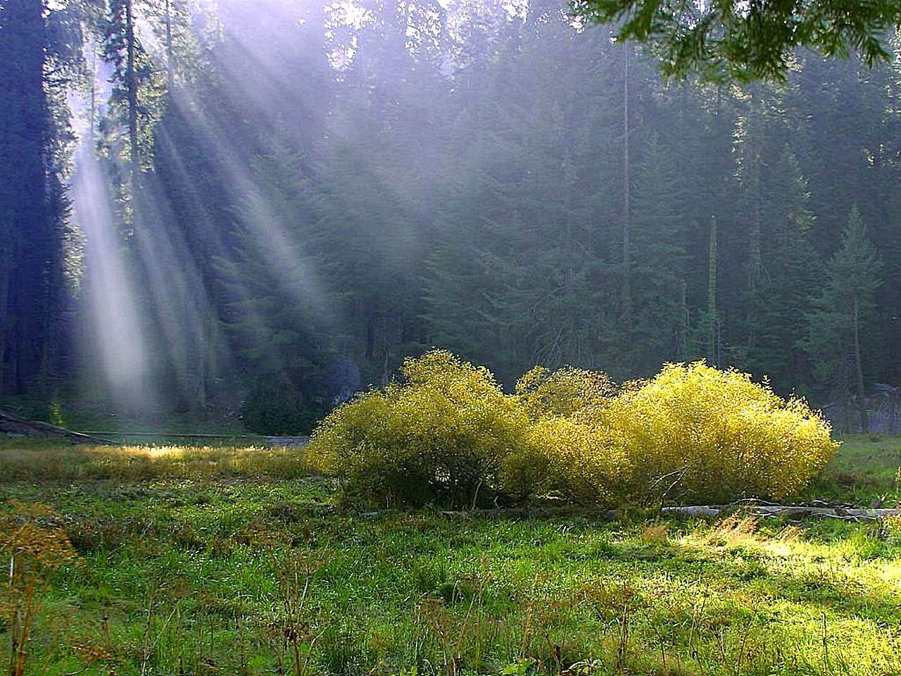File rays on the wikimedia commons for The meado
