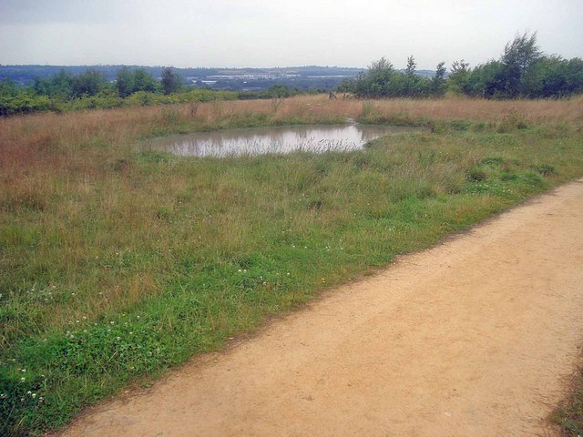 Small pond in Bestwood Country Park - geograph.org.uk - 1436587