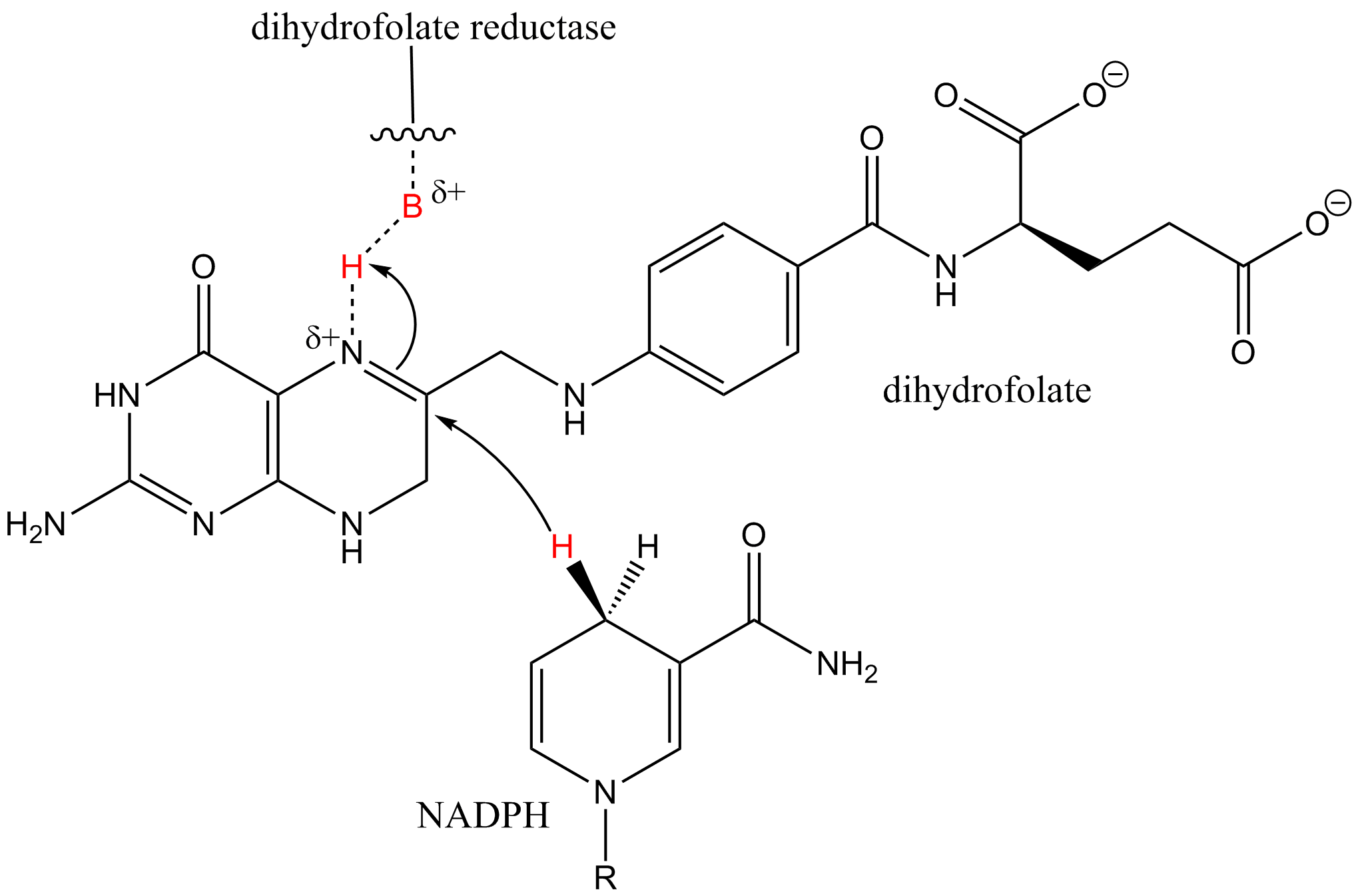 File Synergistic catalysis with dihydrofolate reducase and NADP 2B on 676