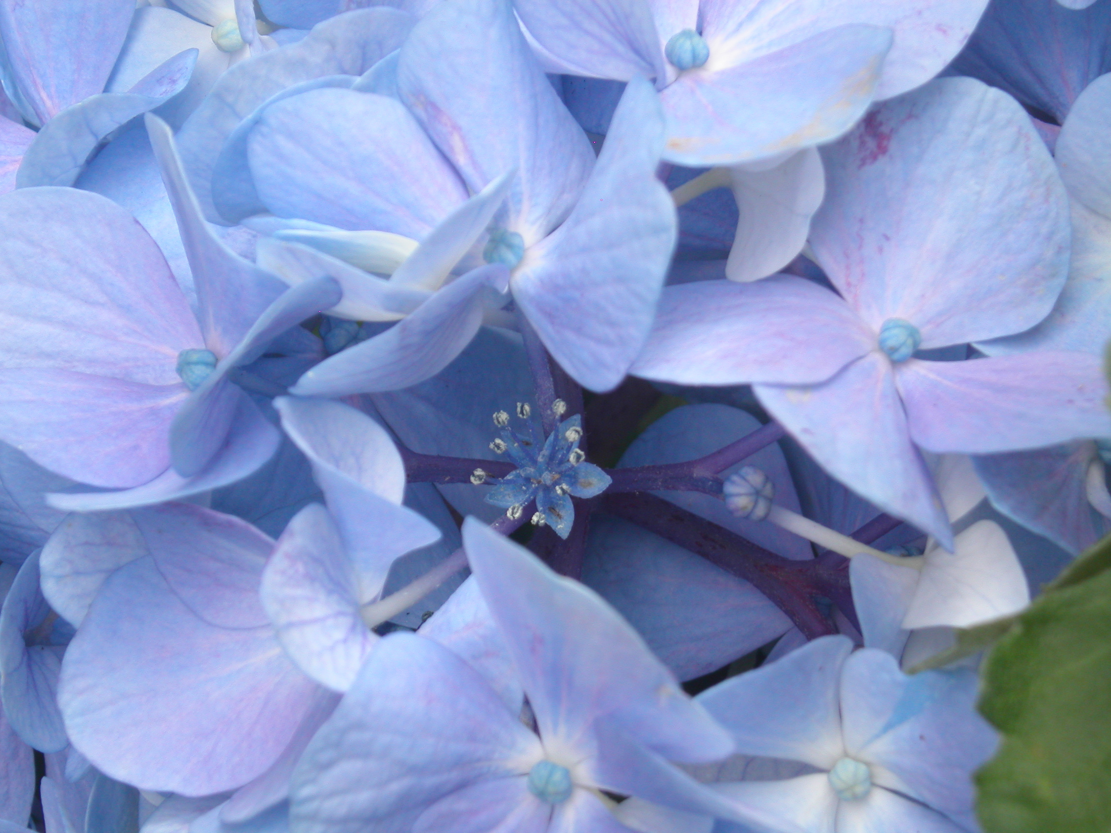 real flowers images  reverse search, Beautiful flower
