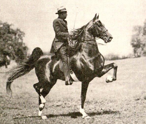 Wing Commander Horse Wikipedia