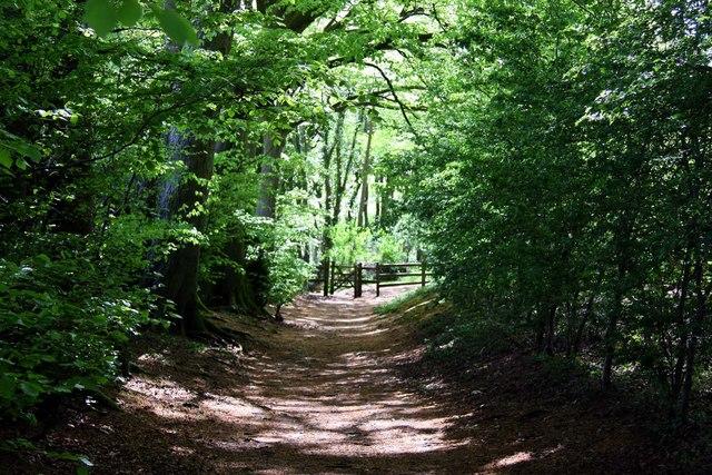 Woodland track on Watlington Hill - geograph.org.uk - 1288904