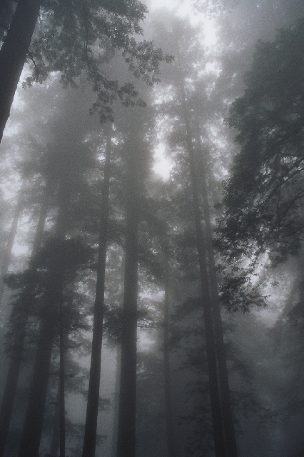 http://upload.wikimedia.org/wikipedia/commons/8/82/030803a_redwoodfog.jpg