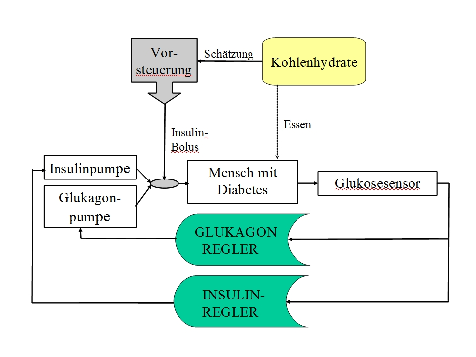 Großartig Anatomie Und Physiologie Der Bauchspeicheldrüse Bei ...