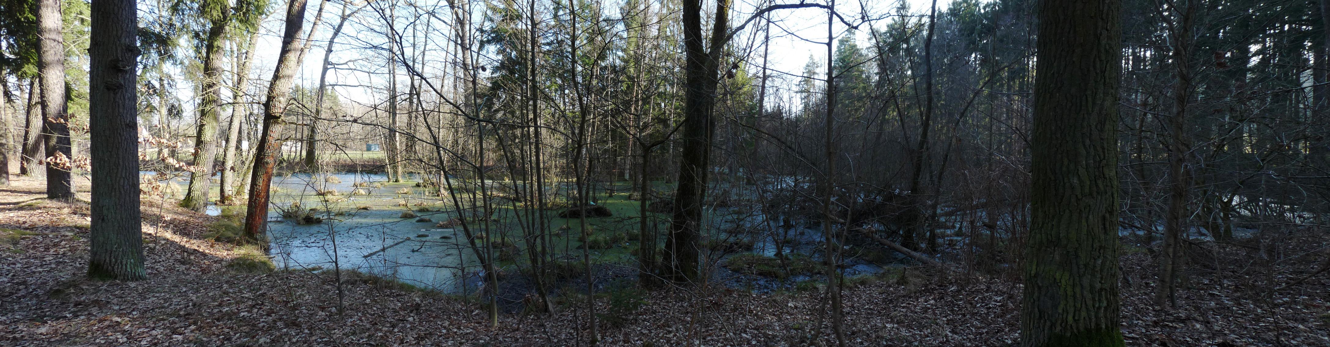 Branišovský les - mokřad