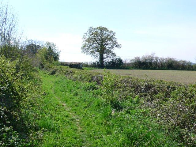 Bridle Path near Tintinhull - geograph.org.uk - 1276995