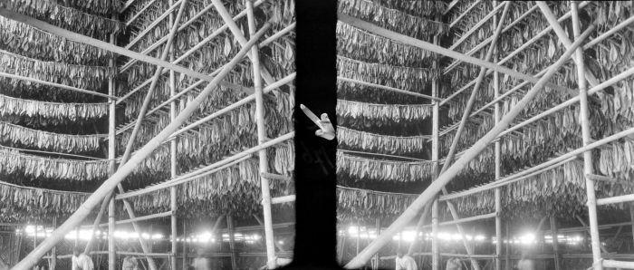 File:COLLECTIE TROPENMUSEUM Tabakdroogschuur met aangeregen bladeren aan de anakkajoe's Djember TMnr 10011737.jpg