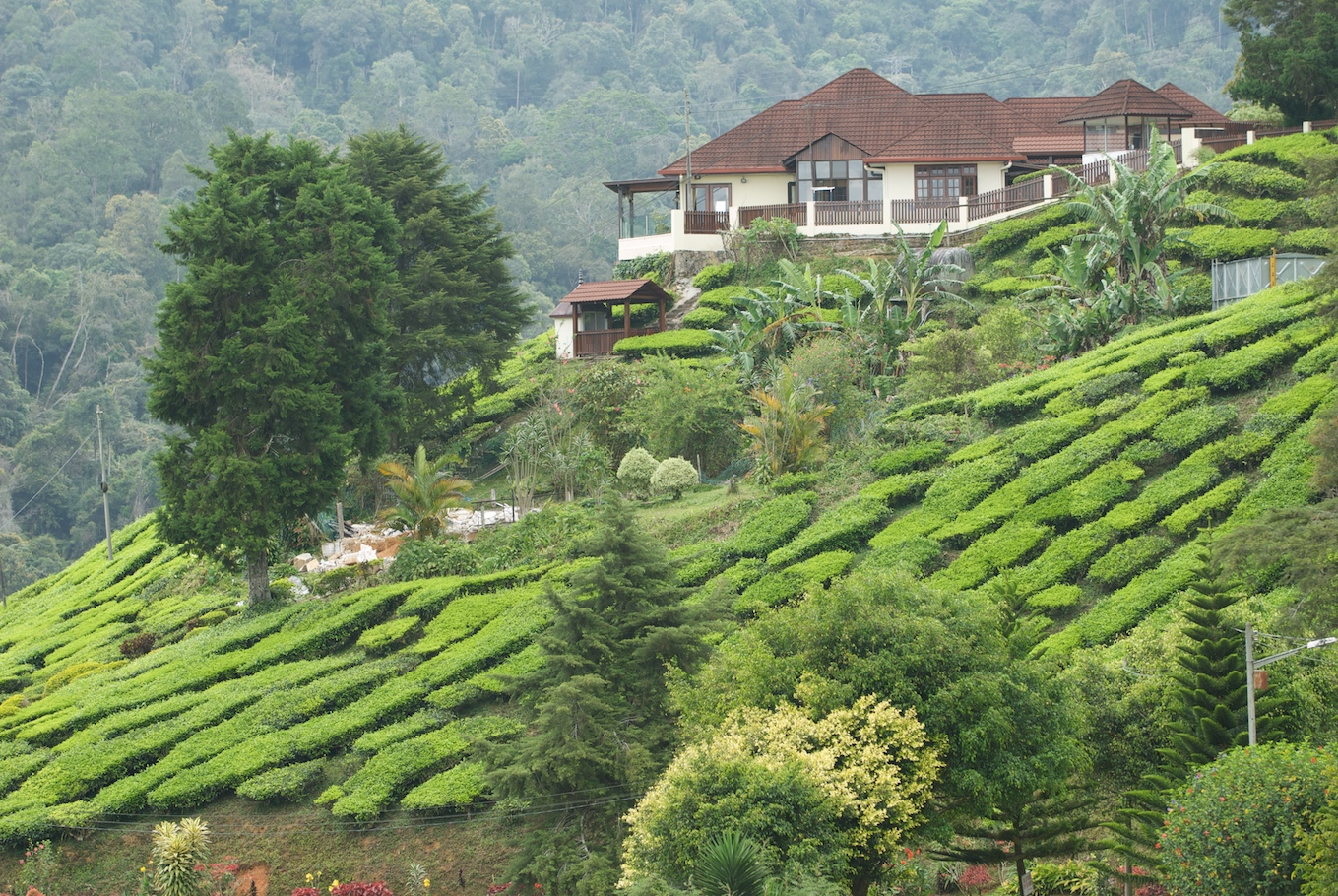 essay my trip to cameron highland