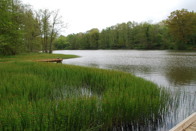 Cannop Ponds - geograph.org.uk - 1319044