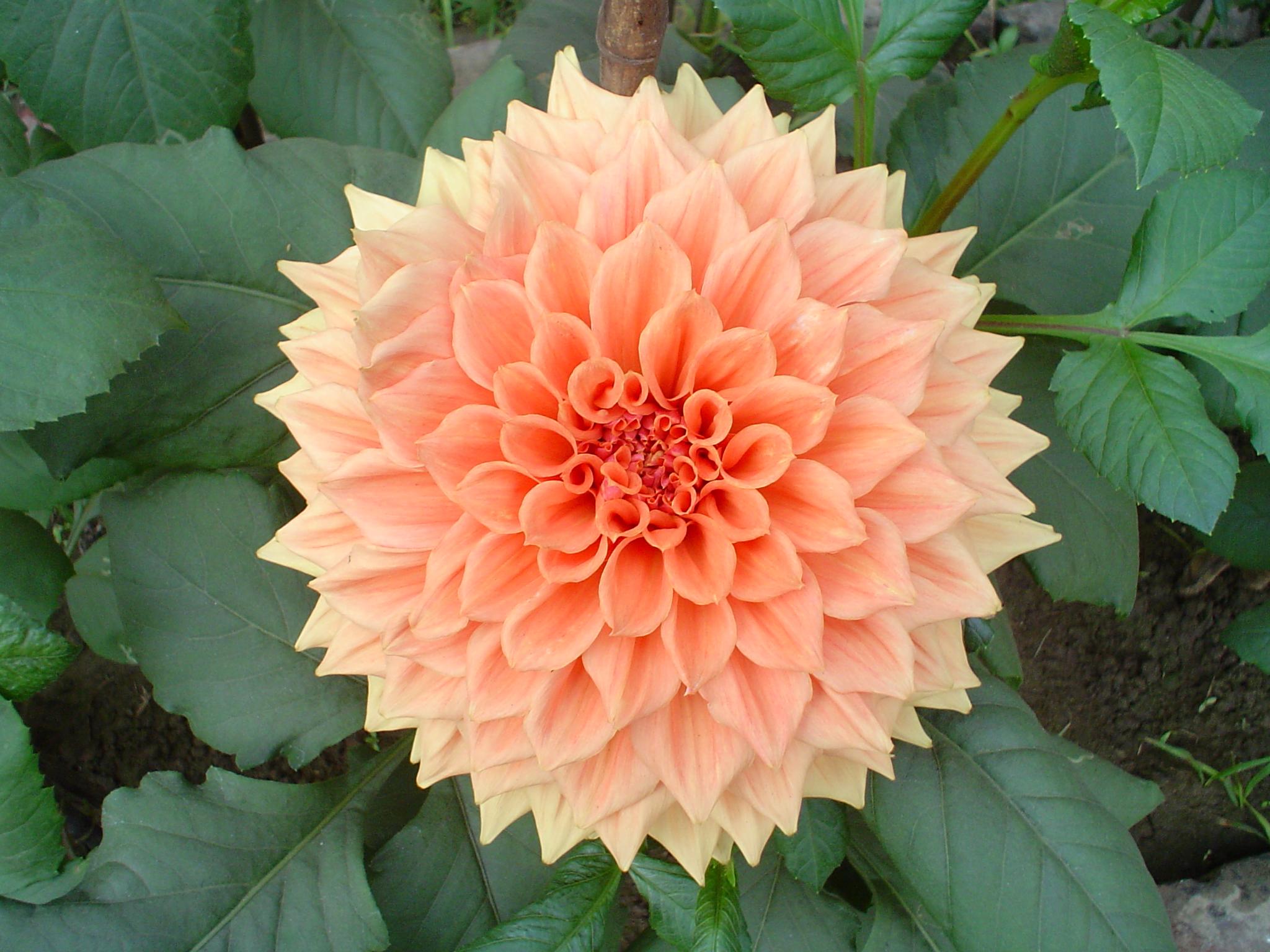 Fotos de flores de floriculturas 21