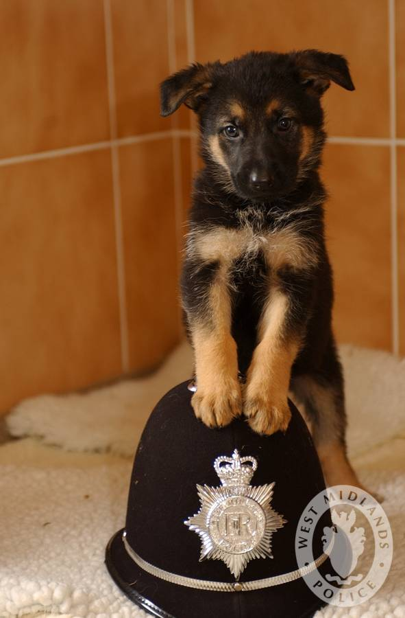 Dog Training Dalry