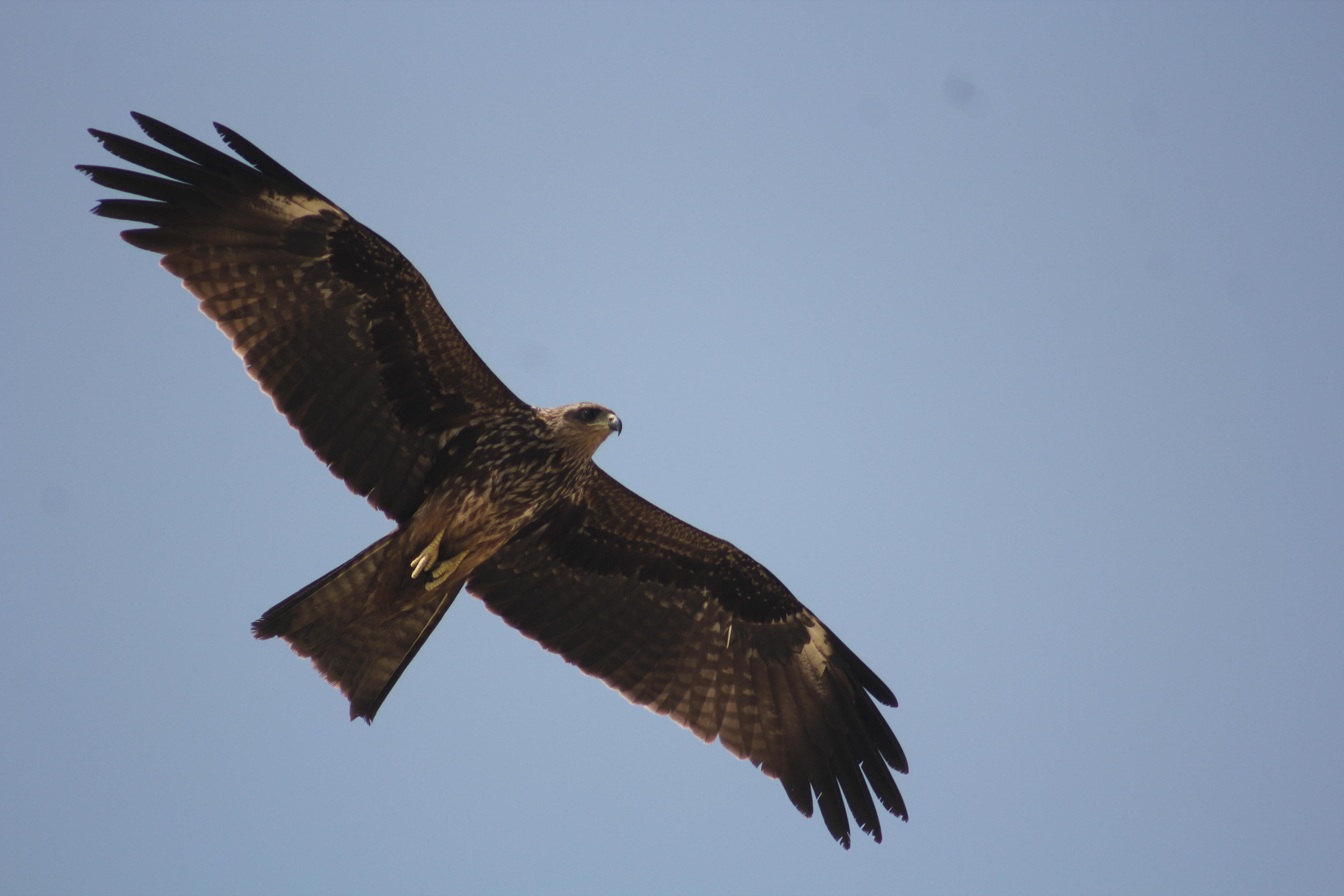 Eagles Kotka