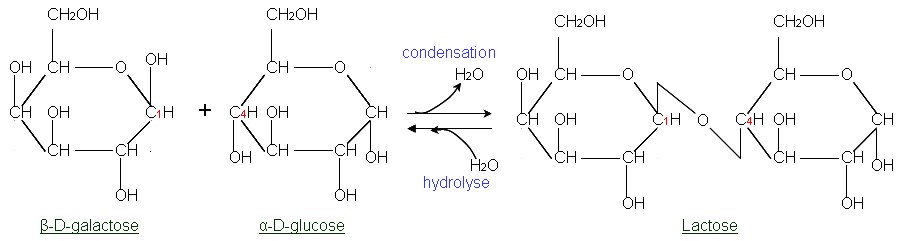 Condensation To Form Pyridiimine Ring