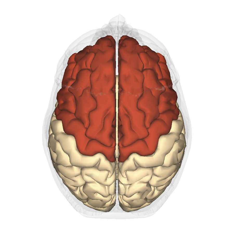 File:Frontal lobe - superior view.png - Wikimedia Commons