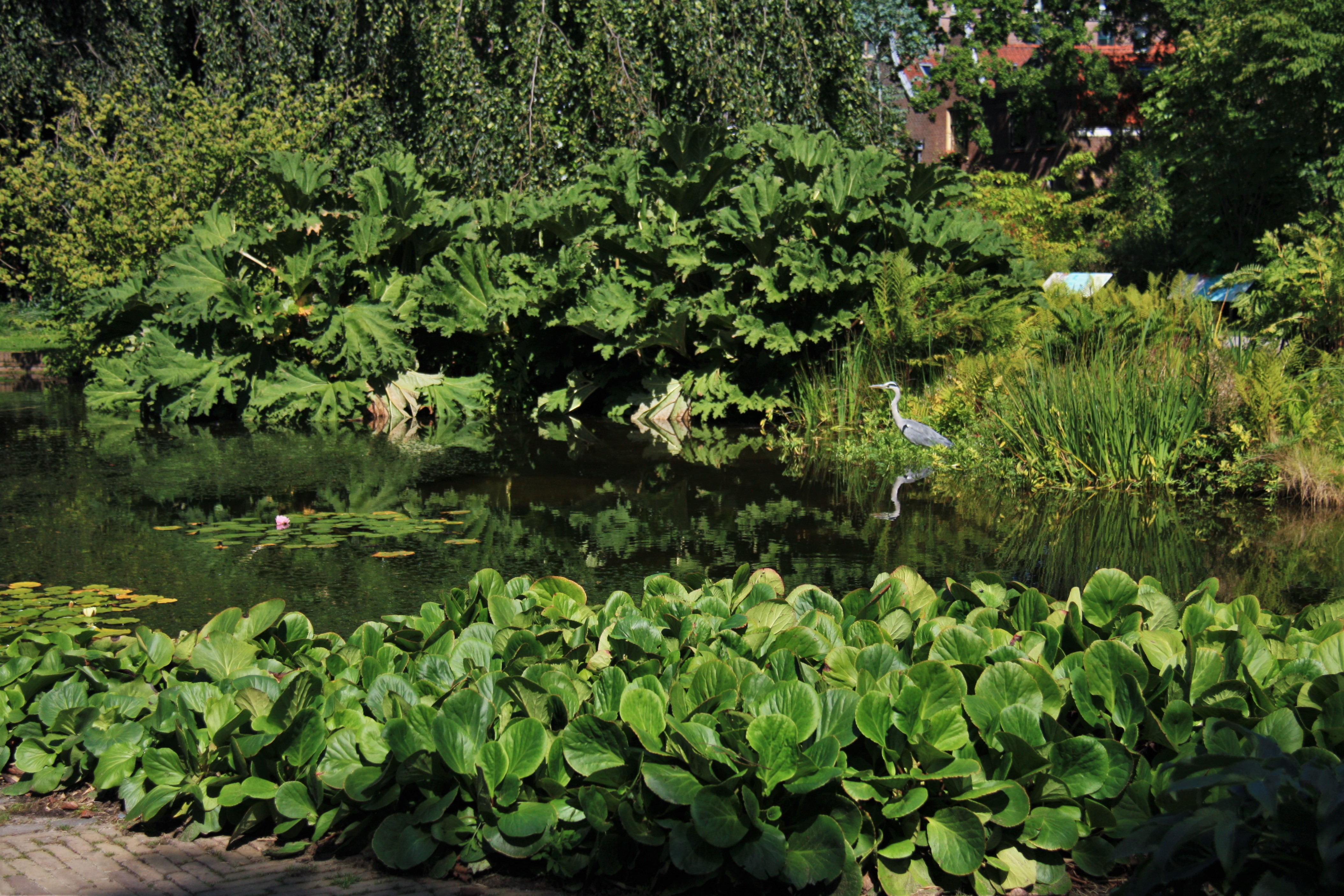 Botanische Tuin Leiden : File hortus botanicus leiden lake in the park g wikimedia commons