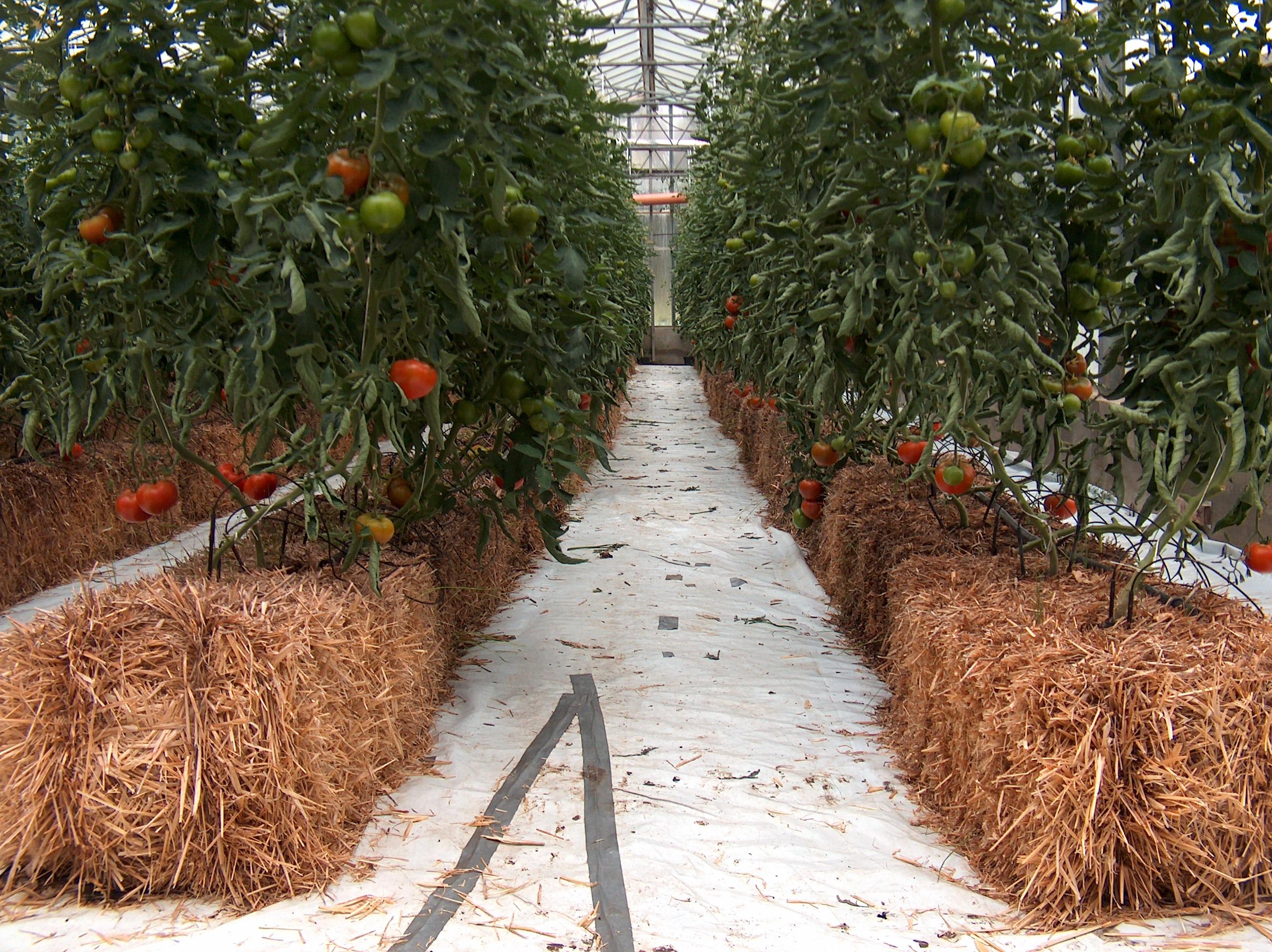 Homemade Hydroponics Pdf | hydroponic fruit trees