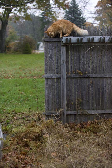 гифка кот на заборе была выложена