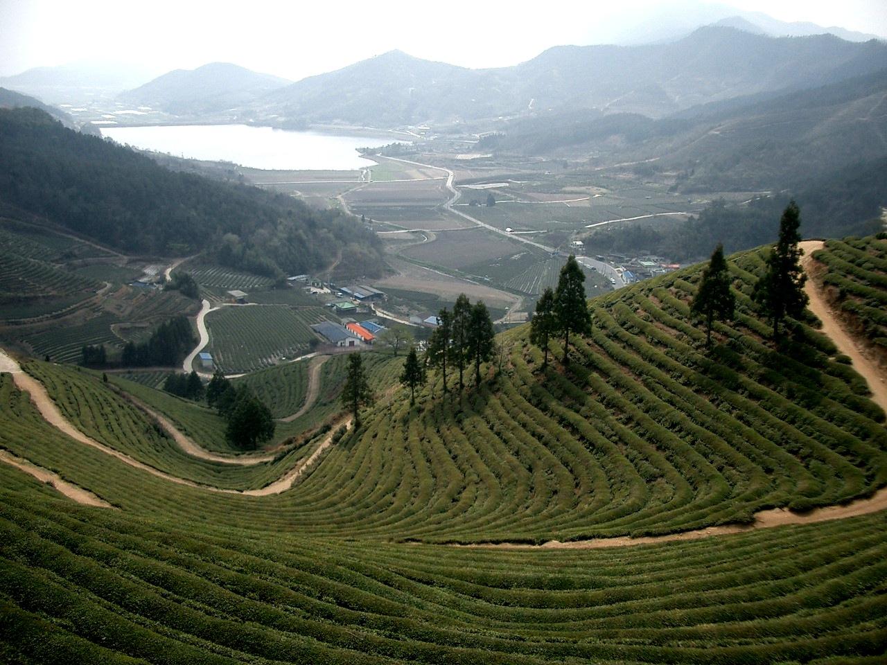 """Résultat de recherche d'images pour """"Boseong south korea"""""""