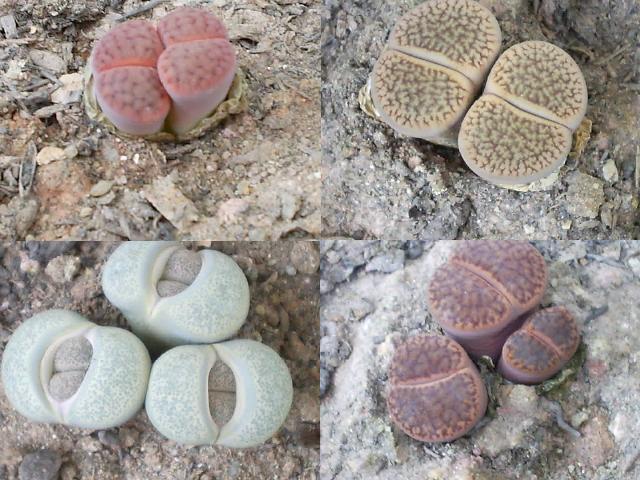 Pilzzucht  Pilze selber züchten  Pilzanbau für Haus und
