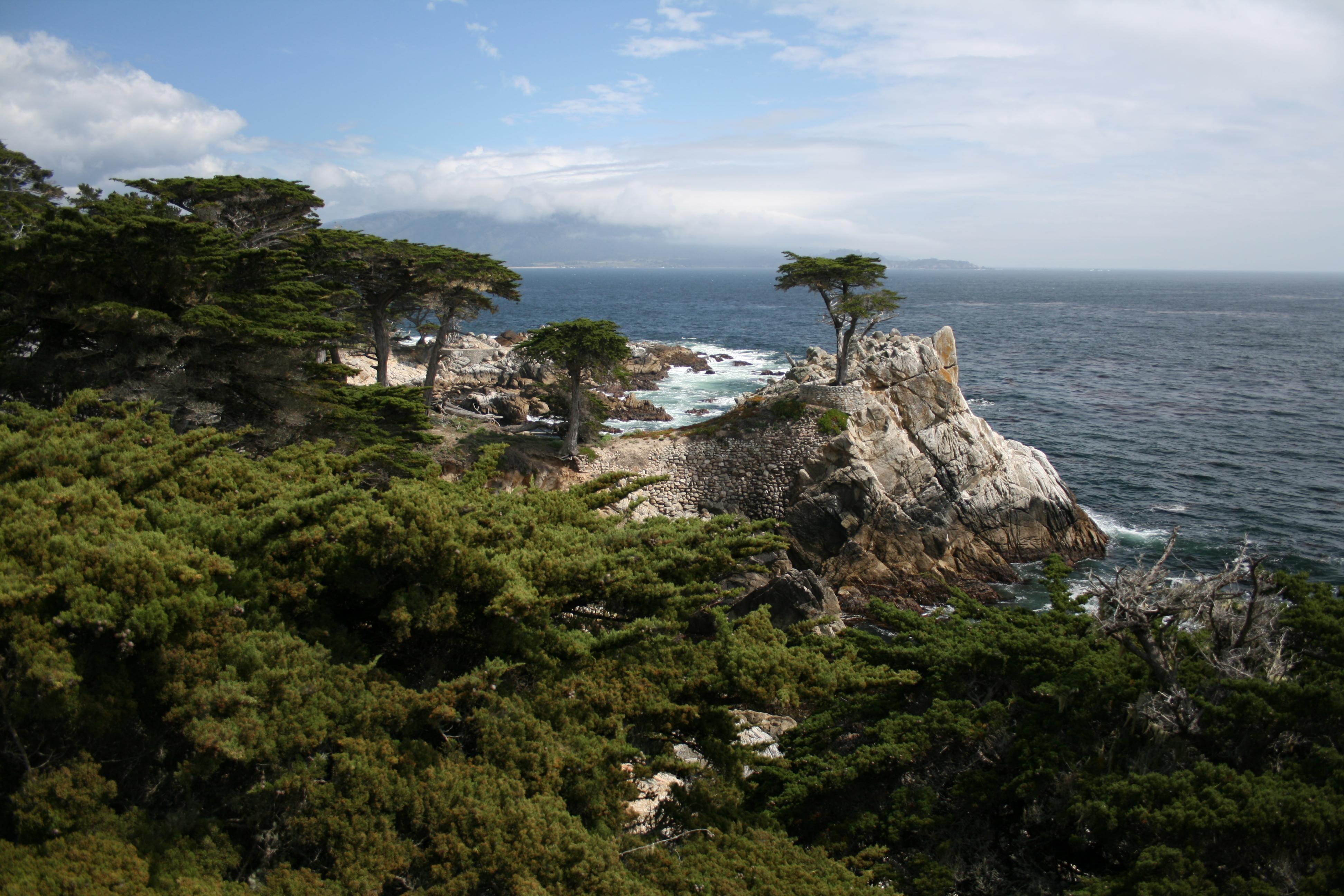 File Lone Cypress Pebble Beach Jpg