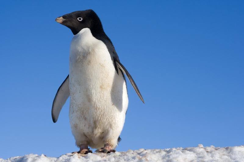 Animais da Antártida Fauna e Curiosidades