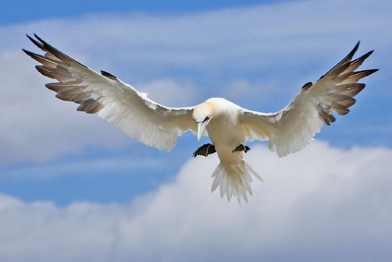 Bílé ptáky