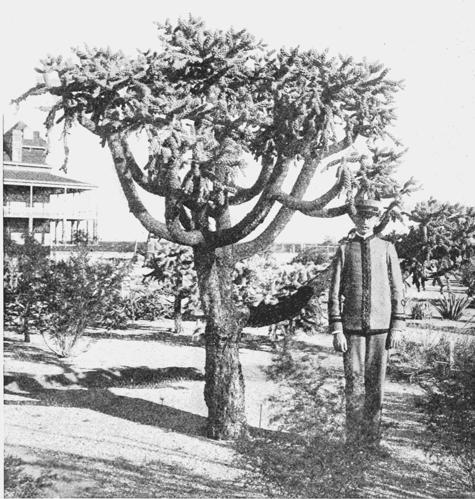 large succulents online