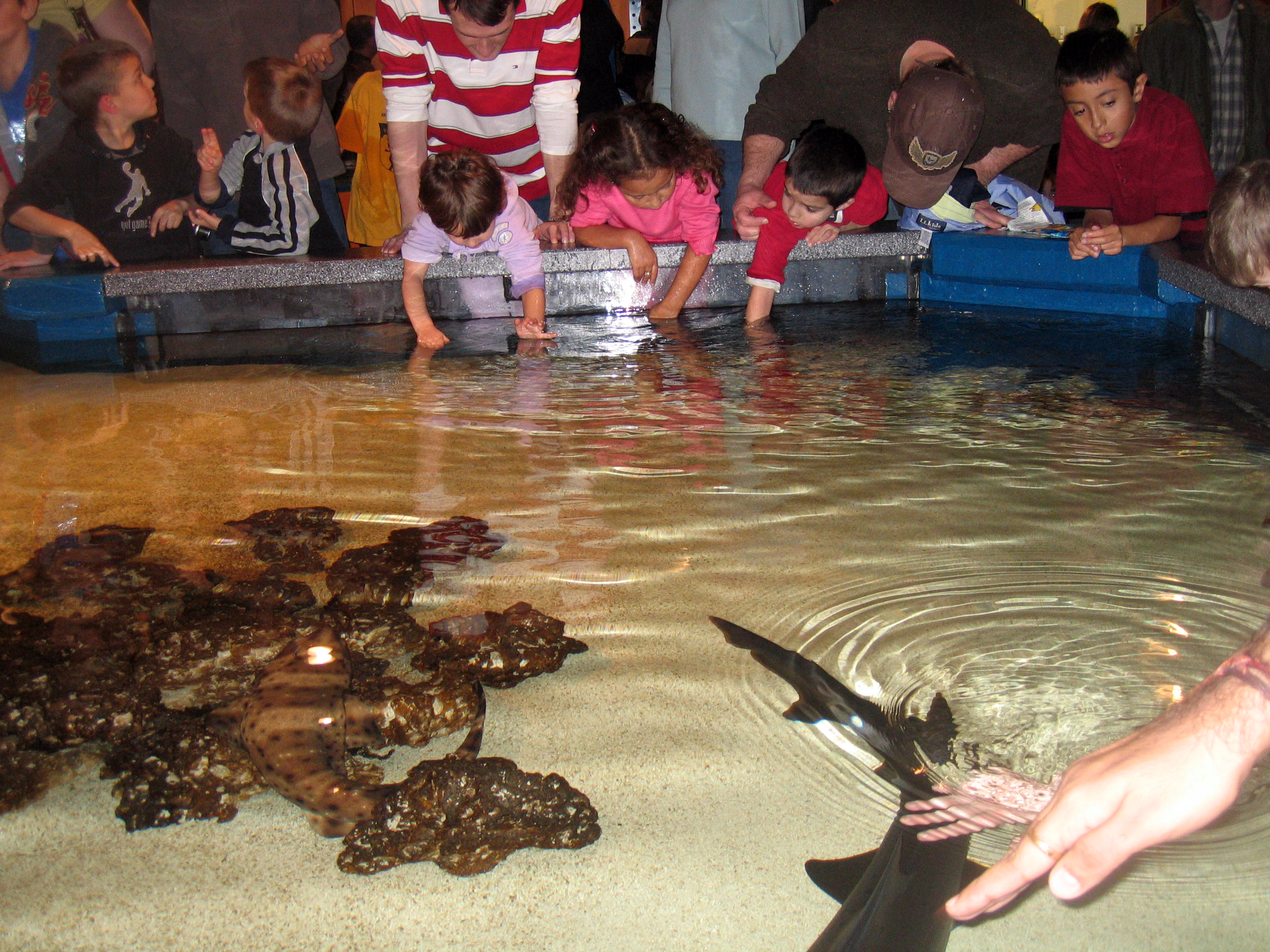 Image Result For Newport Aquarium In
