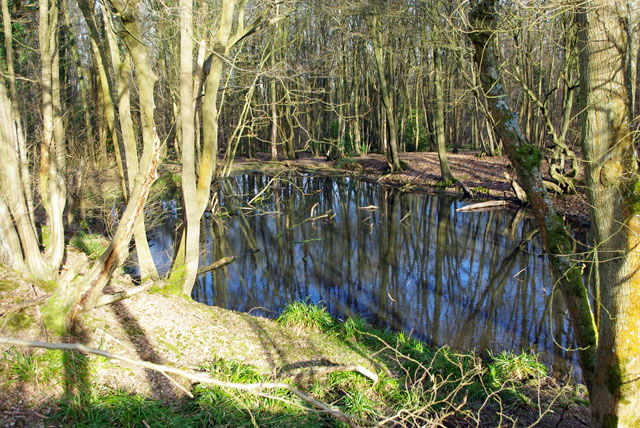 Pond in Glover's Wood - geograph.org.uk - 1756331