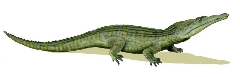 Argentina- tierra de paleontologos? (superpost)