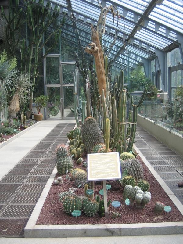 Cactoideae wikipedia for Jardin botanico madrid