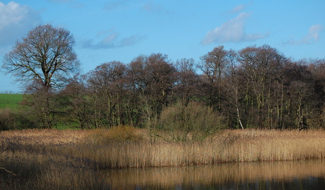 Reed Beds Budworth Mere - geograph.org.uk - 338156
