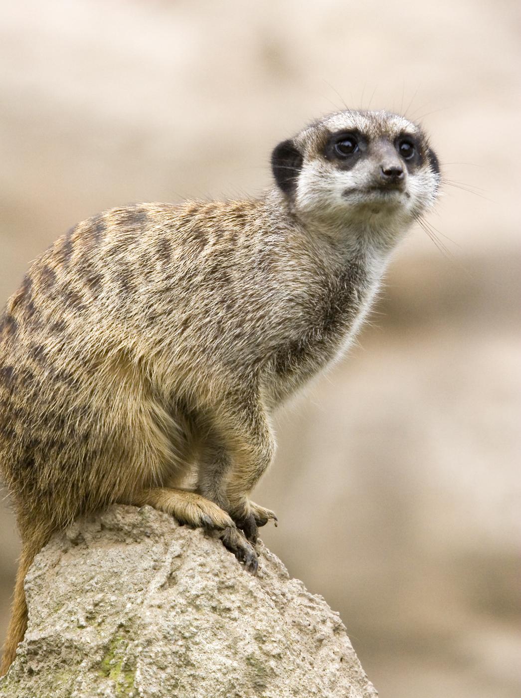 Imágenes de animales con información sobre ellos