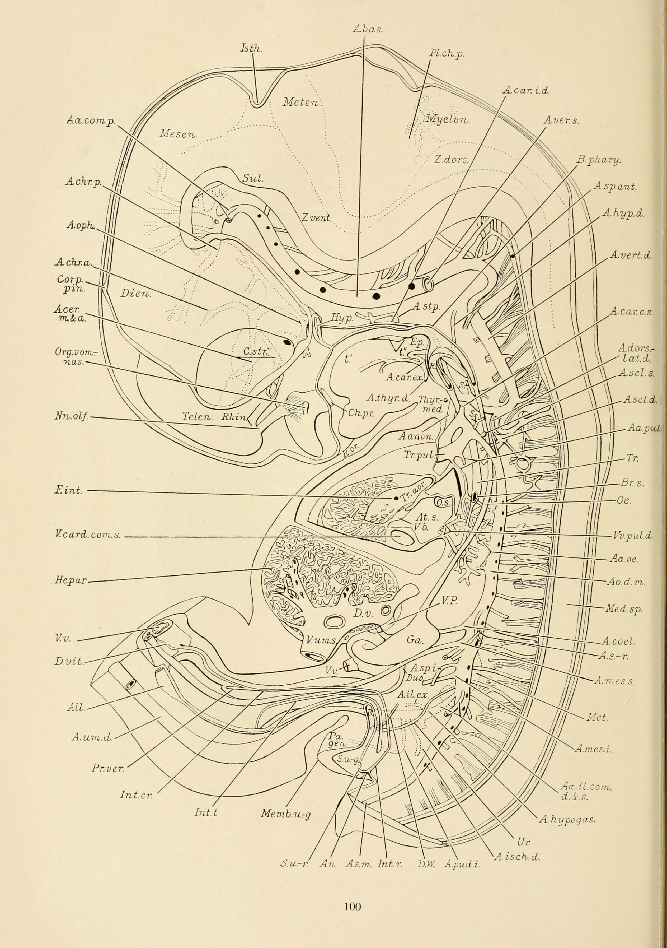 File:The American journal of anatomy (1901) (14768266842).jpg ...