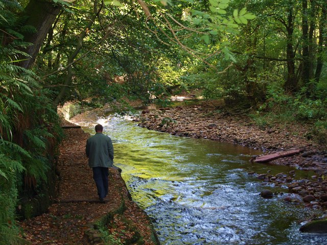 The path through Gelt Wood - geograph.org.uk - 1519431