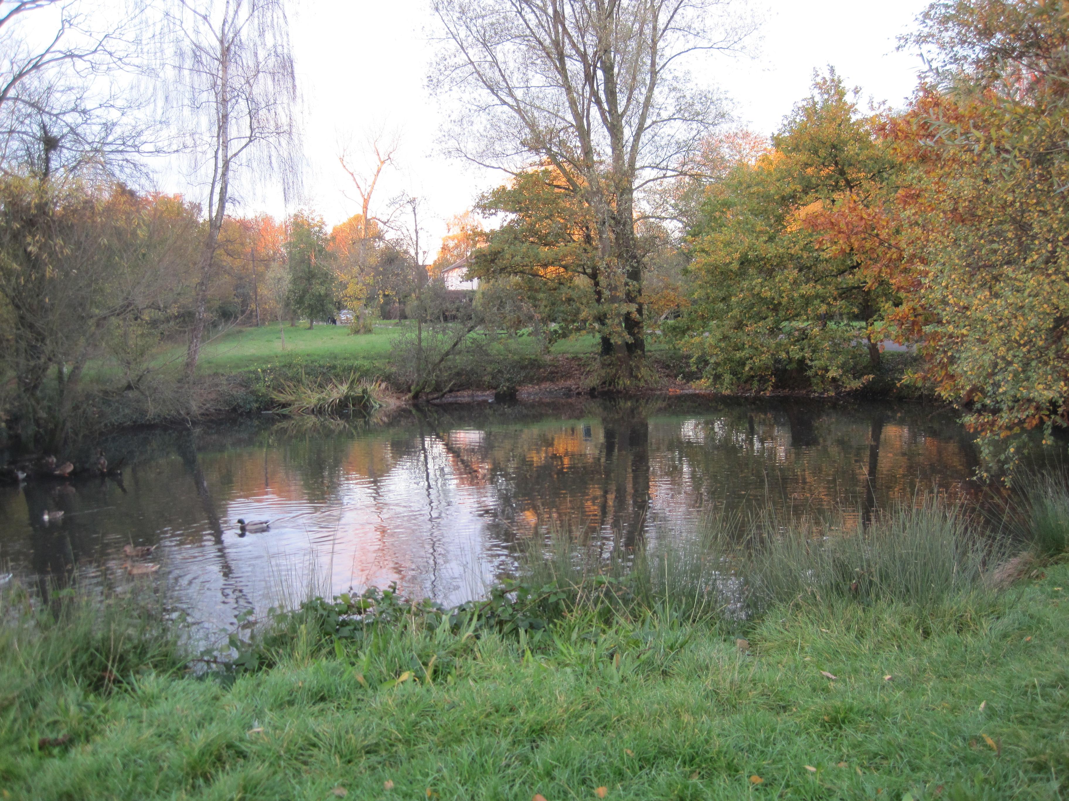 File Totteridge Green Laurel Farm Pond Jpg Wikipedia
